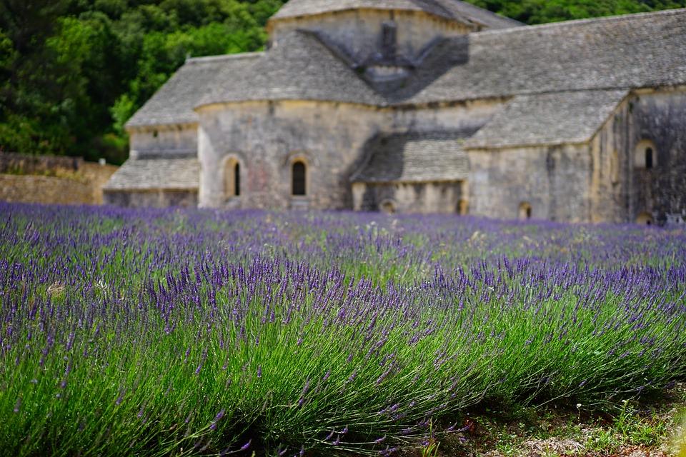 lavender-1275377_960_720