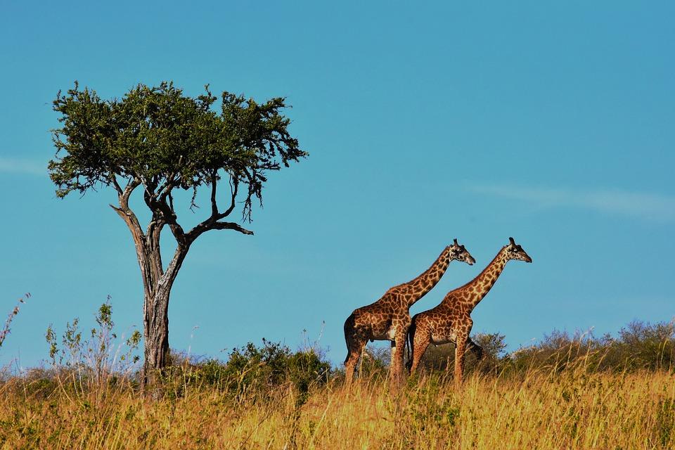 wildlife-1536582_960_720