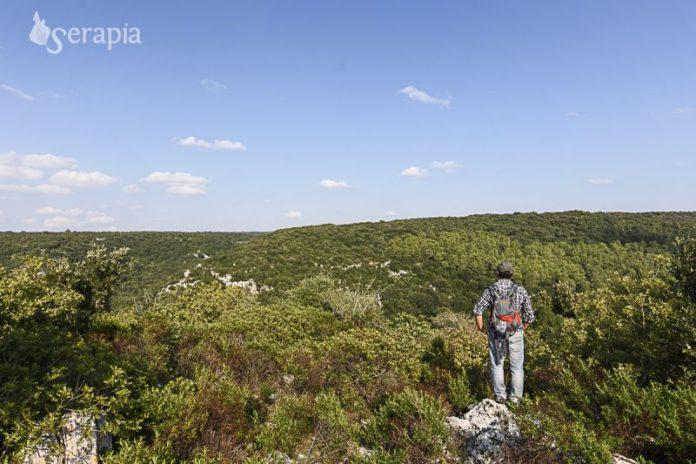 panorama-bosco-delle-pianelle