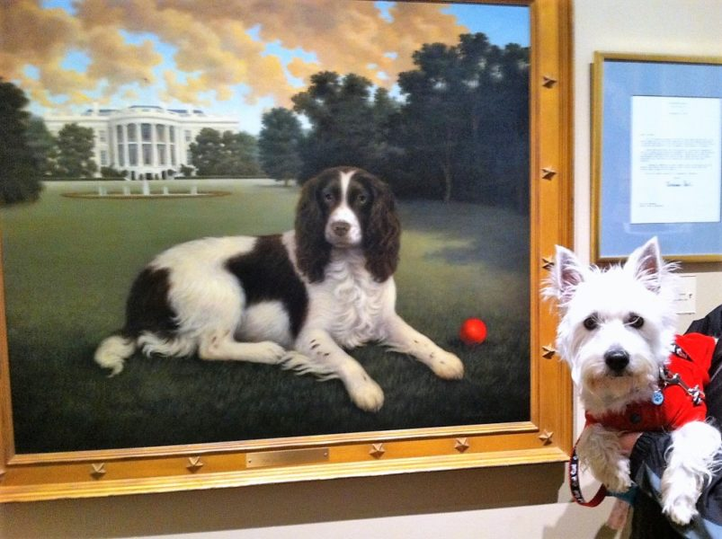 cani al museo