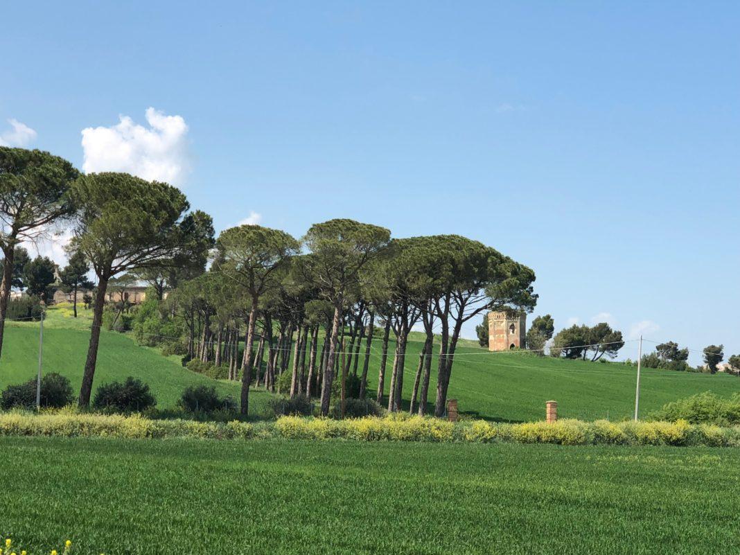 L'Orecchietta