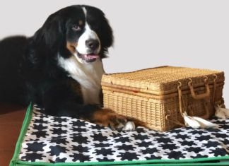 Otto e la sua valigia