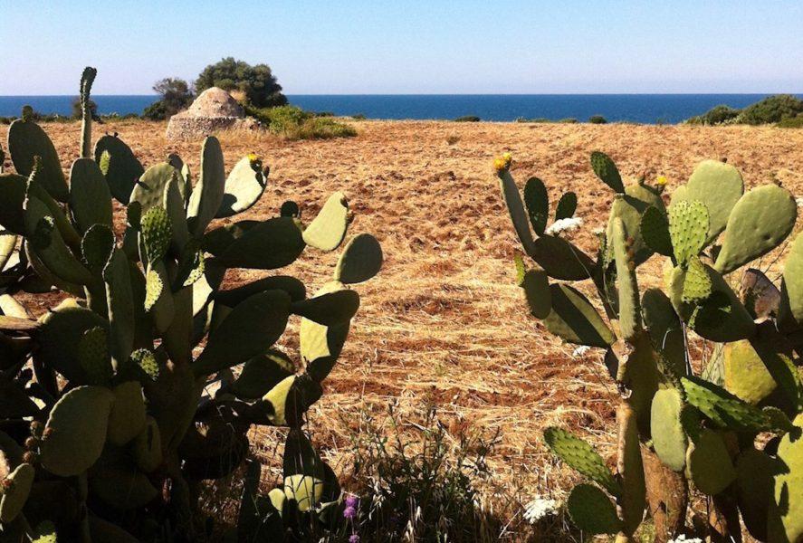 mare d Puglia